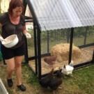 Gode grunde til at du skal have høns.