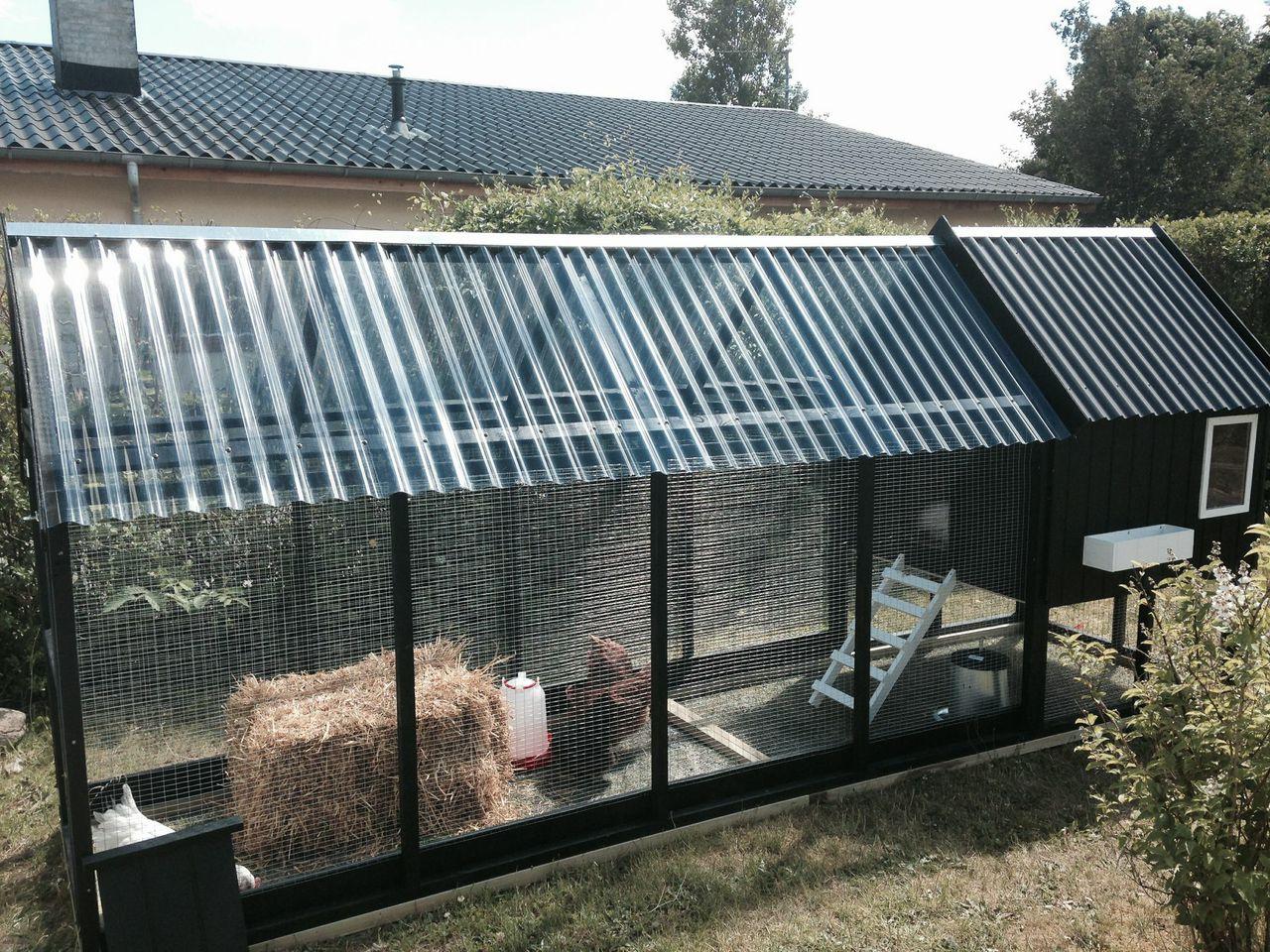 Høns i bur